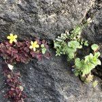 七十二候は「草木萌動」に。暦は草木の芽吹きの頃と言うけど、もう花々がちんまり咲き始めてます(*'▽')/旧暦1/18・戊申
