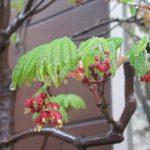 二十四節気は「穀雨」に。そろそろ、雨は優しく柔らかく降って、穀物・作物に恵みの雨。野草・雑草を装う雨☔/旧暦3/9・戊戌