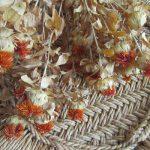 七十二候は「紅花栄」に。暦がこう言い出すと、なぜか数日だけ、花屋に並ぶ「紅花」が、今年も全然見当たらず。2年続けてドライでどうだ(*'▽')/旧暦4/19・戊寅