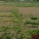 七十二候は「蚯蚓出」に。「蚯蚓(みみず)」が地上にお出ます頃は、母の畑は、夏収穫の為に土を耕す頃だなぁと思い馳せる(*'▽')/旧暦3/29・戊午