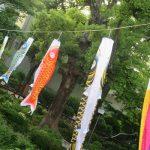 二十四節気は「立夏」に。そして、今日は「端午の節句」。夏の気配満点の日々に、こいのぼり🎏眺めて、新茶と鯉の和菓子を(*'▽')。/旧暦3/24・癸丑
