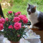 今日は「母の日」。花屋さんはどこもカーネーションだらけのここ数日。母の家にも、カーネーションの鉢が到着したみたいです(*'▽')//旧暦3/28・丁巳