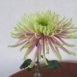 今日は「重陽の節句」です。ああ、もうそんな時期かぁ~!!さっそく、菊の花一輪飾って長寿を祈る一日に。/旧暦8/3・庚申